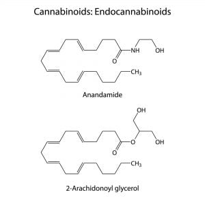 Chemical structure of Endocannabinoids