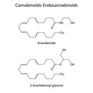 Structura chimică a endocannabinoizilor